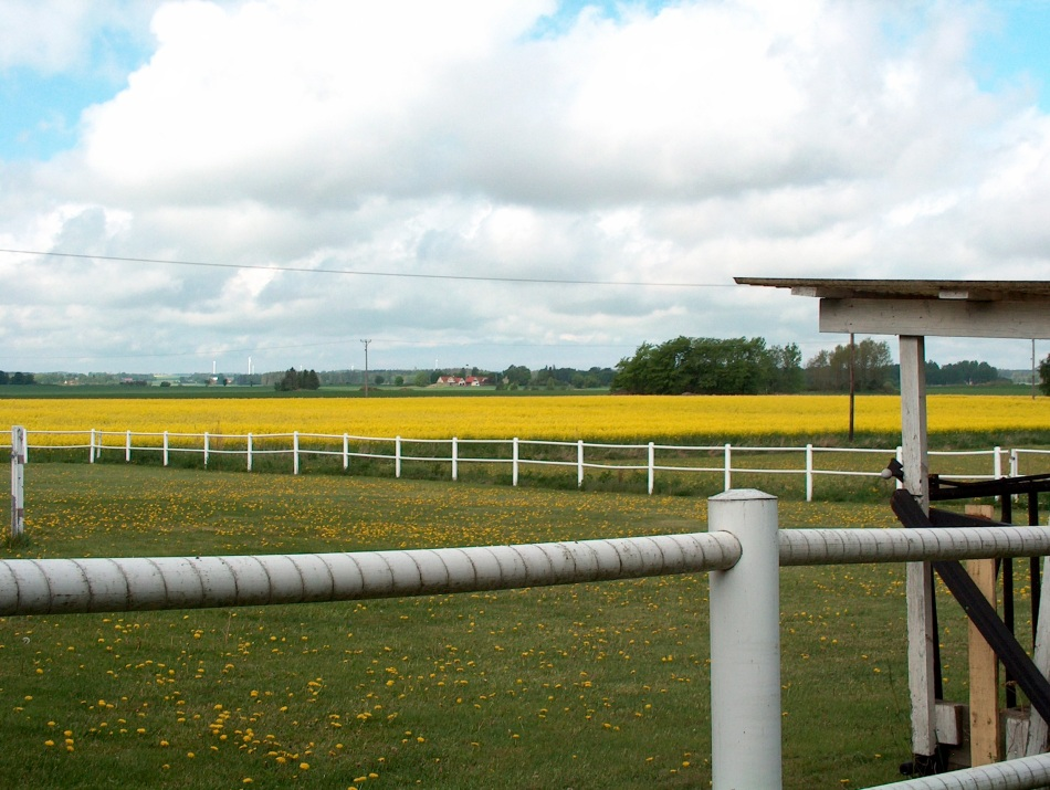 Empty horse pasture!