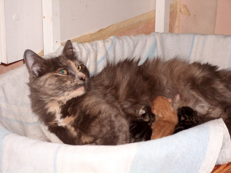 Lisa was a neighbor cat who was the mother to our next cat