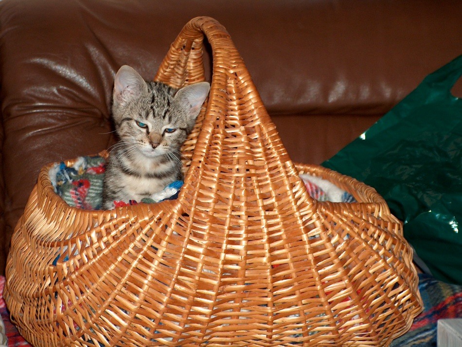 Tasha used to sleep and travel in the car in this little basket as a kitten