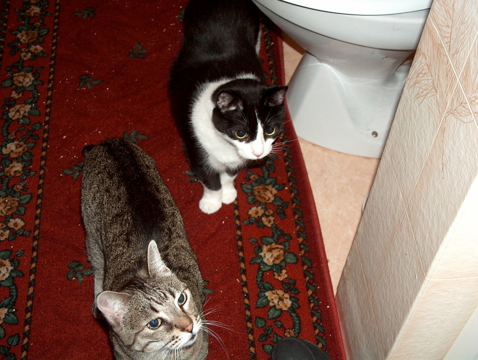 When Juliet and Pumpkin arrived, their new apartment at Gullringstorp was the upstairs bathroom