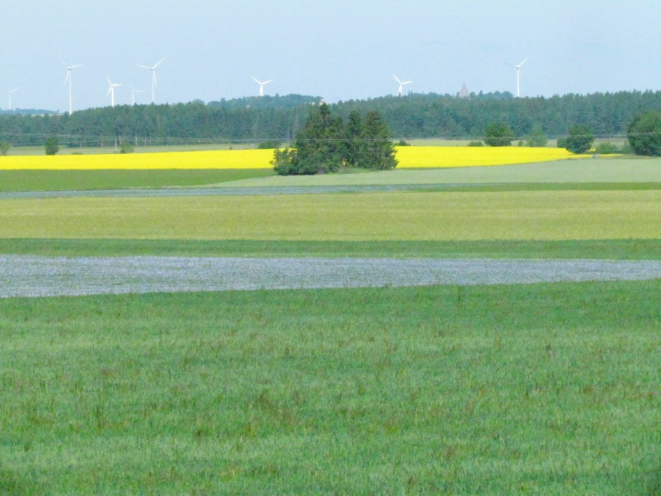 The surrounding fields growing flax(blue) and raps (yellow) are just shinning in the summer sun