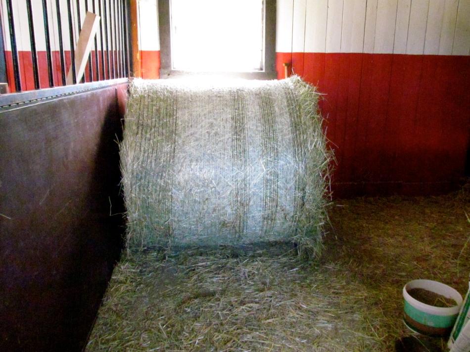 A huge bale of fresh hay! Yummy !!
