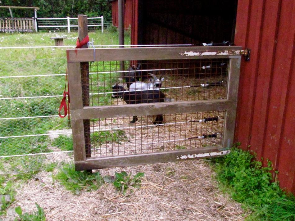 New door for the boy's enclosure