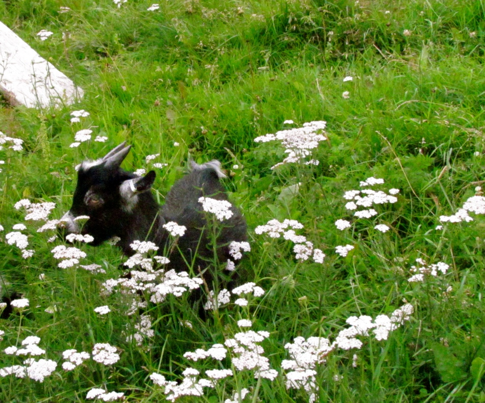 Baby Boy almost lost in the flowers