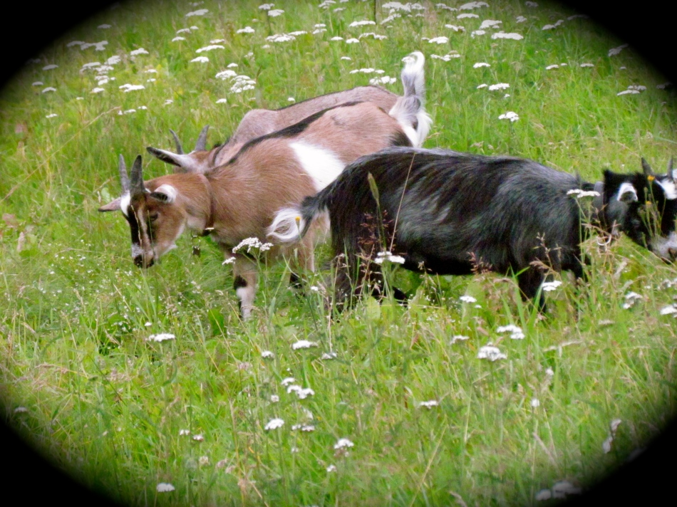 The Baby Girls enjoy the grass and flowers