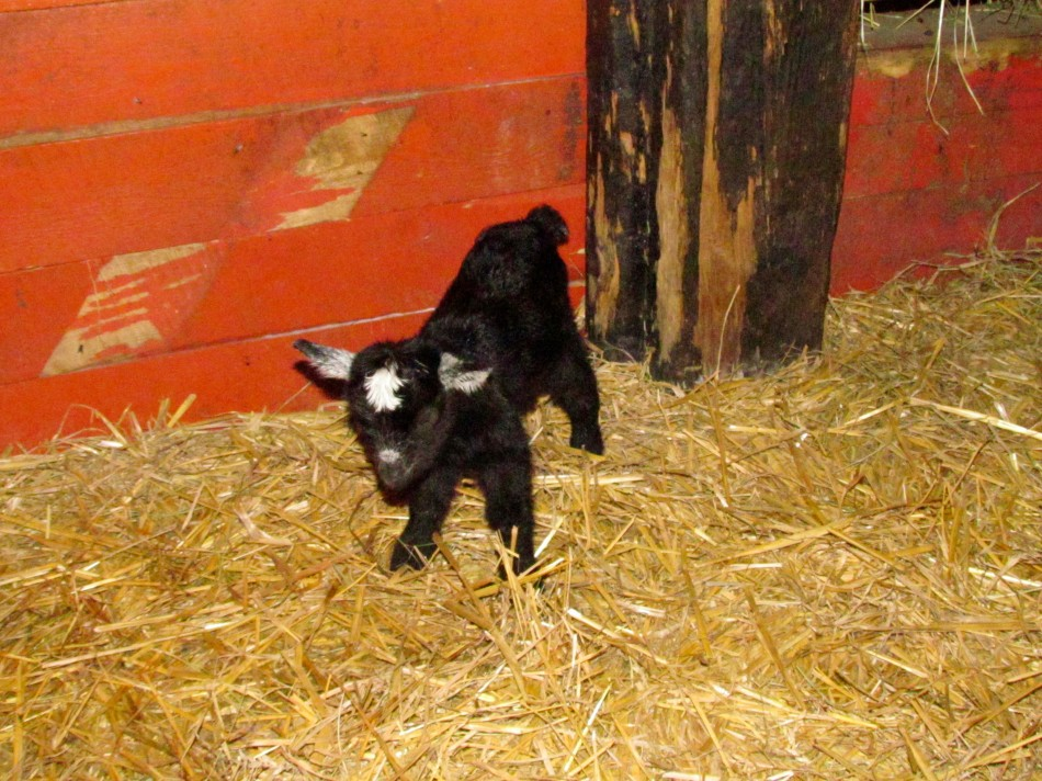 Baby # 1 on those precious tiny legs