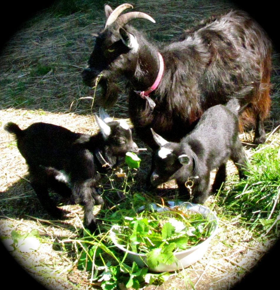 Frida and her twin daughters enjoyed some time out in the baby yard in the sun