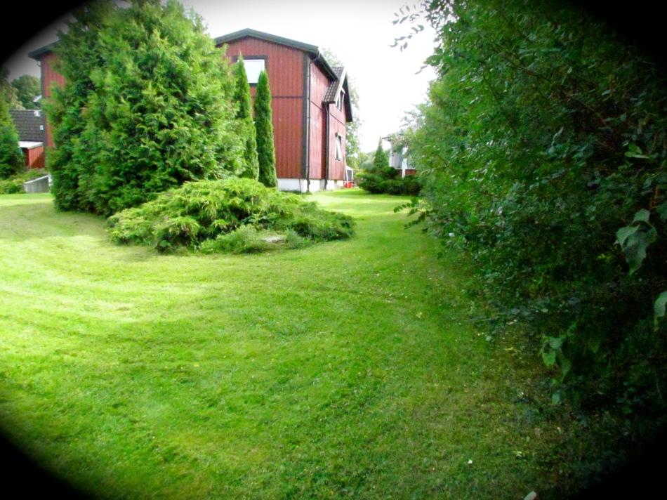 More lawn !!!!!!