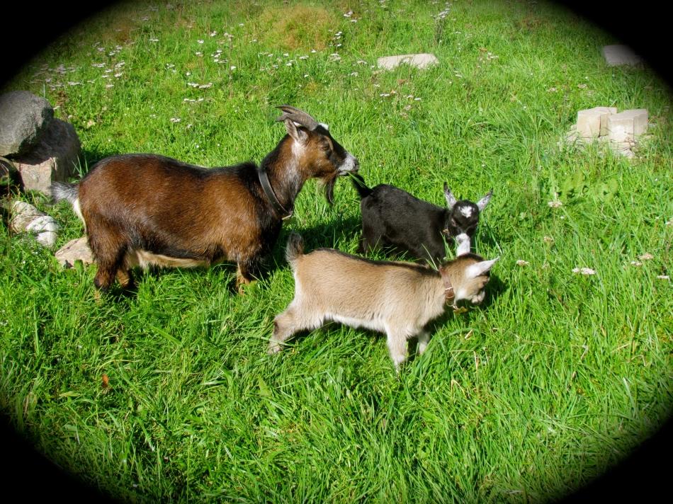 Hilda's little family