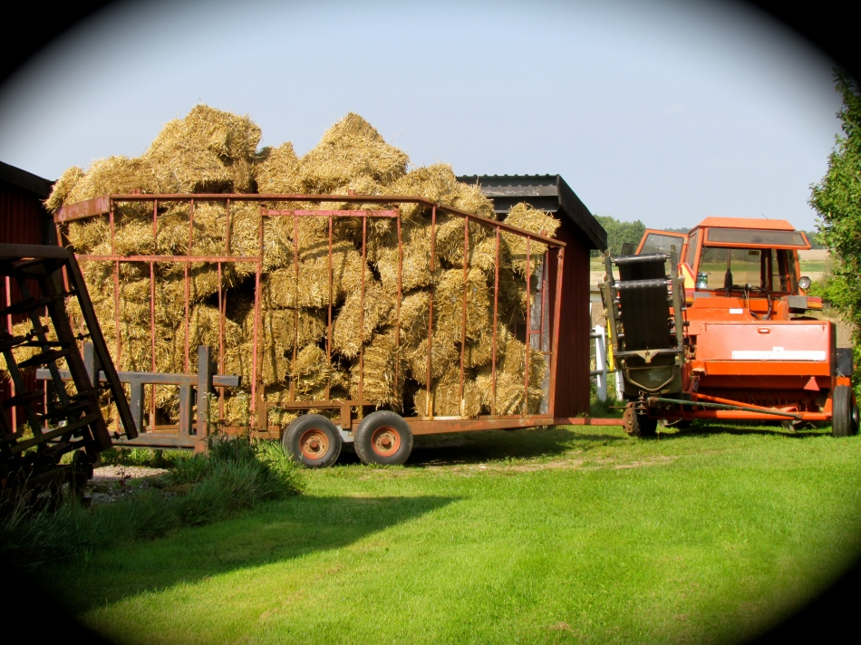 Wow !   That's a lot of straw !