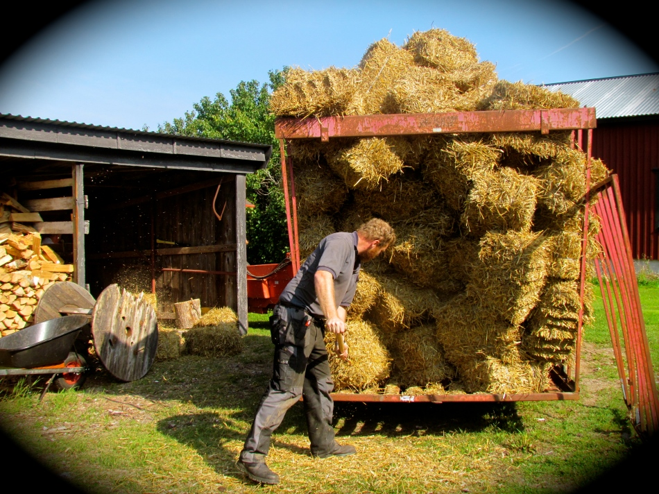 The young man who delivered the straw helps to unload it