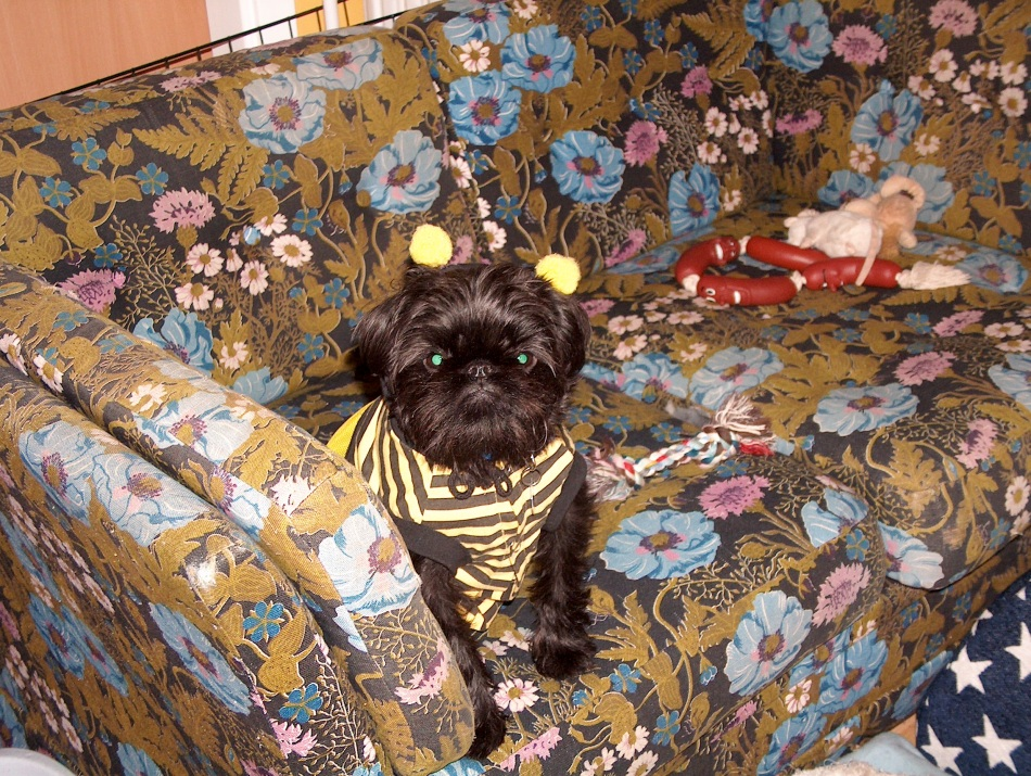 Max in his bumble bee costume