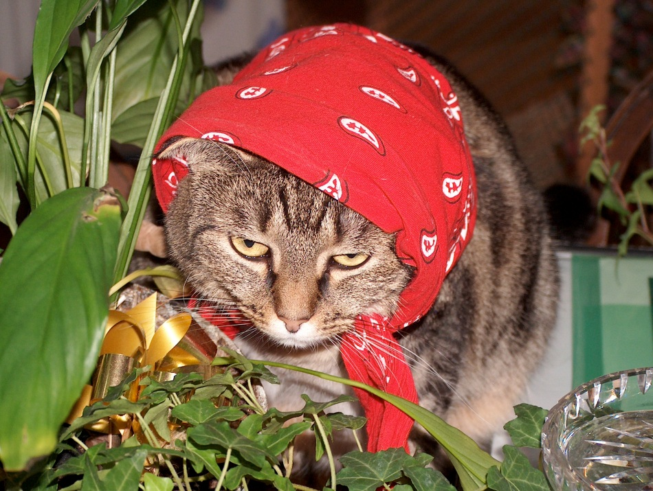 Every good pirate needs a bandana