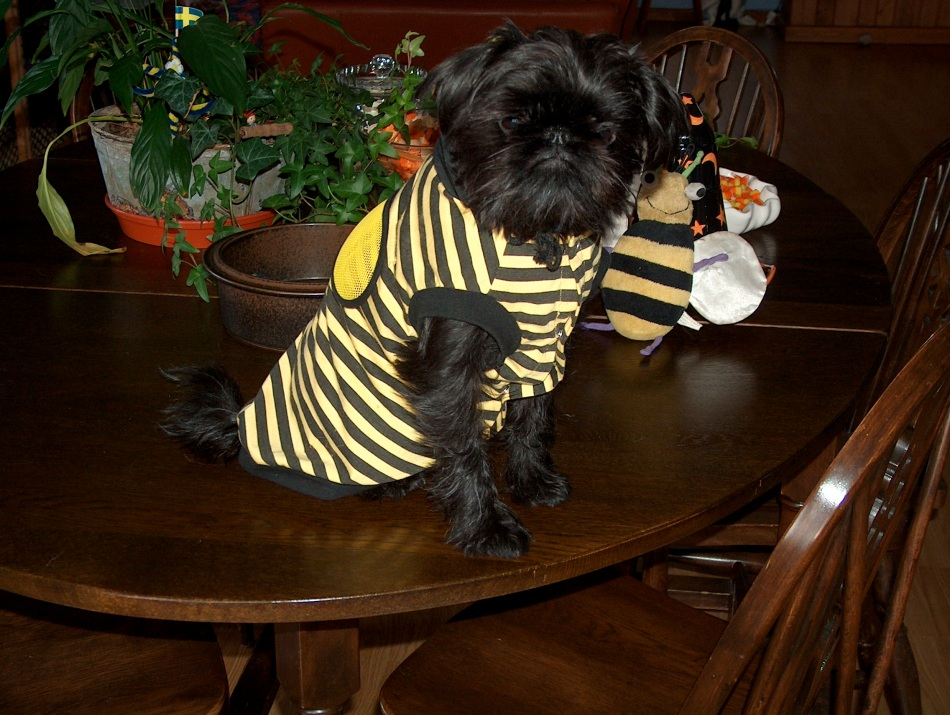 Max the bumble bee with his favorite toy, his bumble bee!