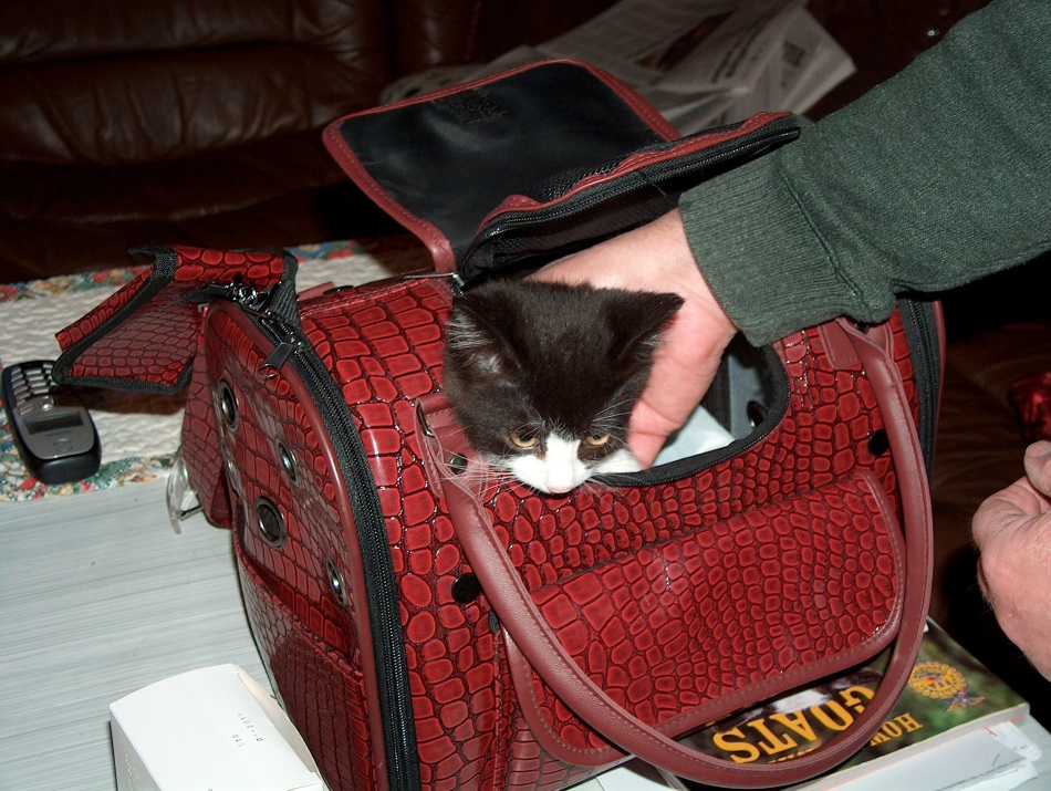 This is the little bag that our new kitty jumped into. He decided we were his new family. Pip arriving home!