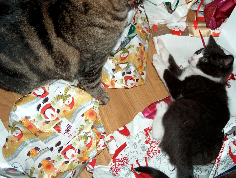 Christmas morning, Tasha that BIG cat and Pip playing in the wrapping paper