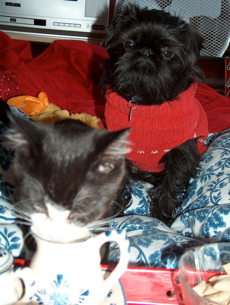 """How nice, mommy brought me breakfast in bed!"" Pip enjoys a taste of my milk while Max stays close."