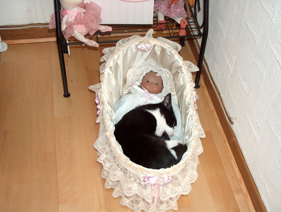 Pip sure knows how to find  cozy places foe a nap. Here he decided the doll's basket would do jut fine.
