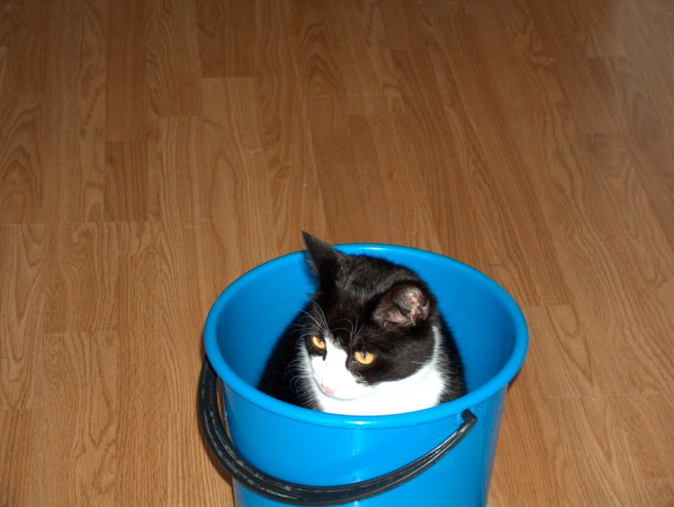 Our little water loving Pip sits in a bucket of water while I clean fish tanks.
