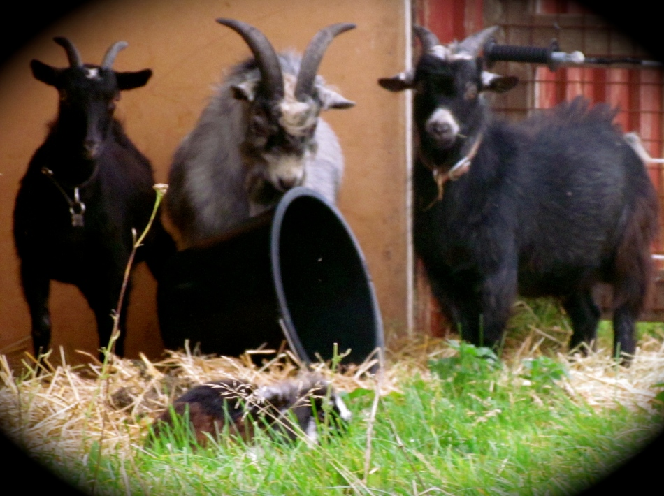 Here is a recent photo of our three boys; Flynn on the left, Balder in the middle and Baby Boy on the right.