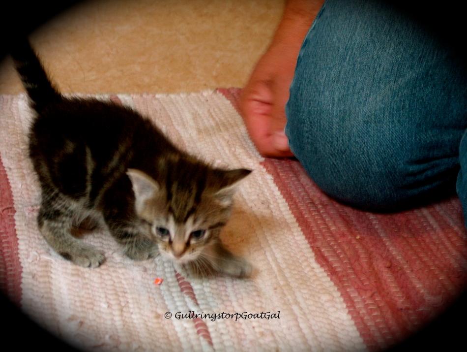 Tasha tries to get around on new,wobbly legs