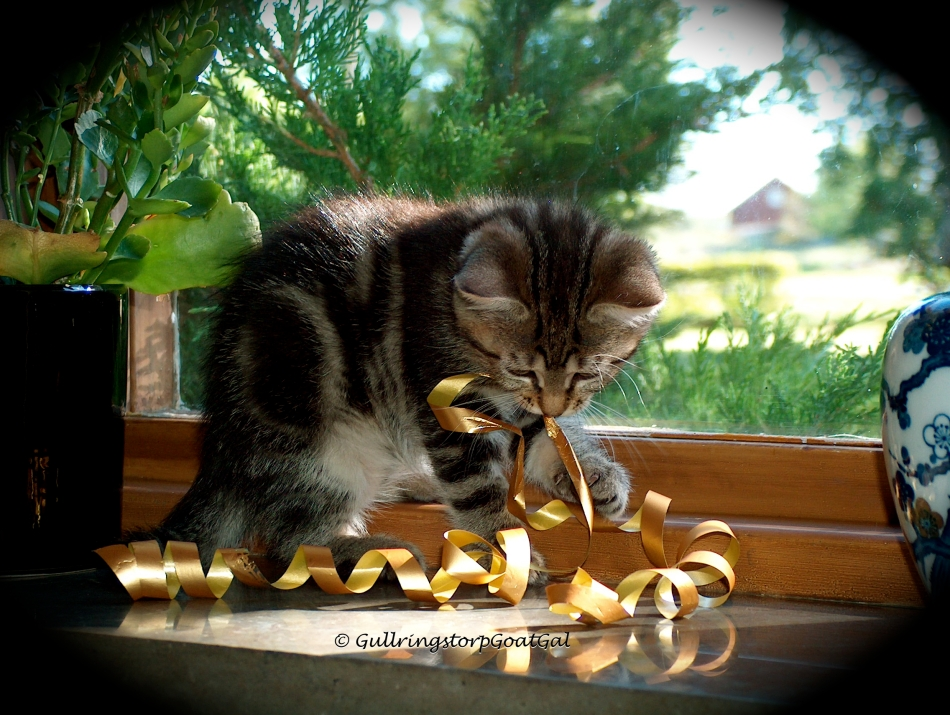 Tasha Baby enjoys her ribbon