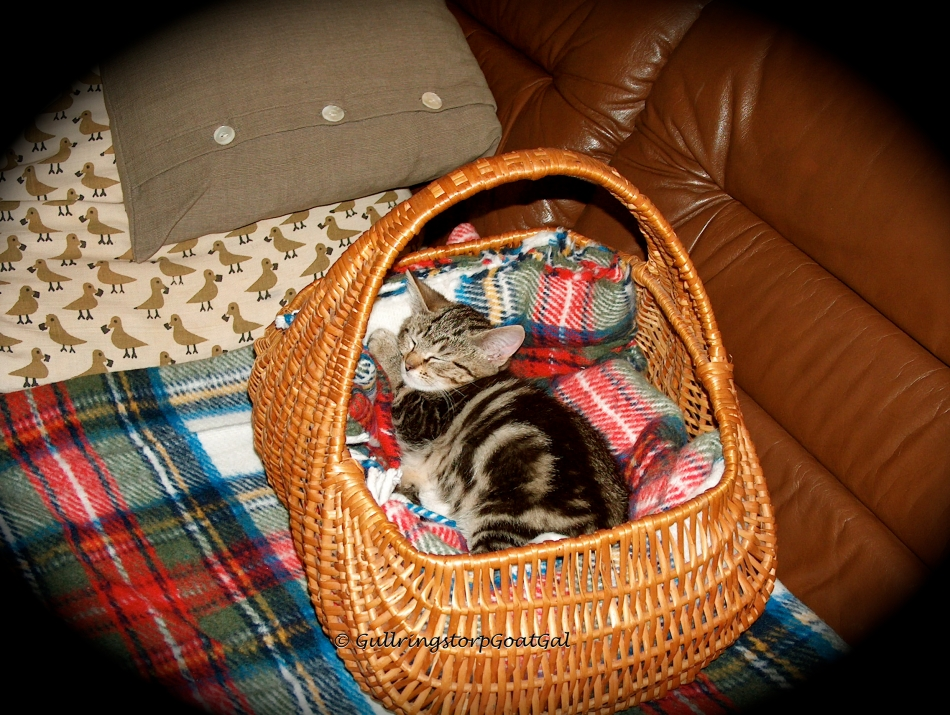 This is Tasha Baby's basket where she sleeps and relaxes  in while traveling in our car