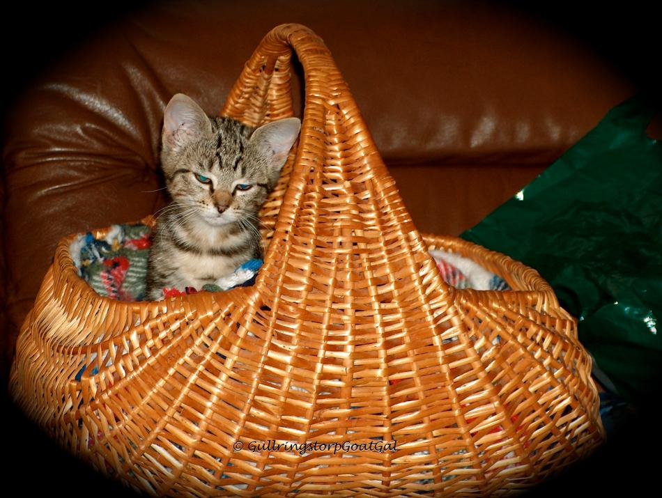 Tasha Baby looks so tiny in her basket