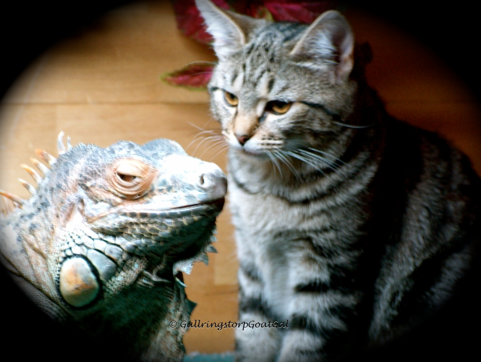 Tasha with her new friend, Little Lady our iguana