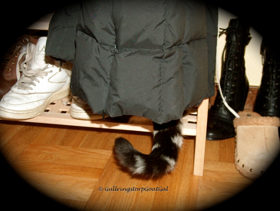A well hidden Tasha Baby on the shoe rack and under a winter jacket.