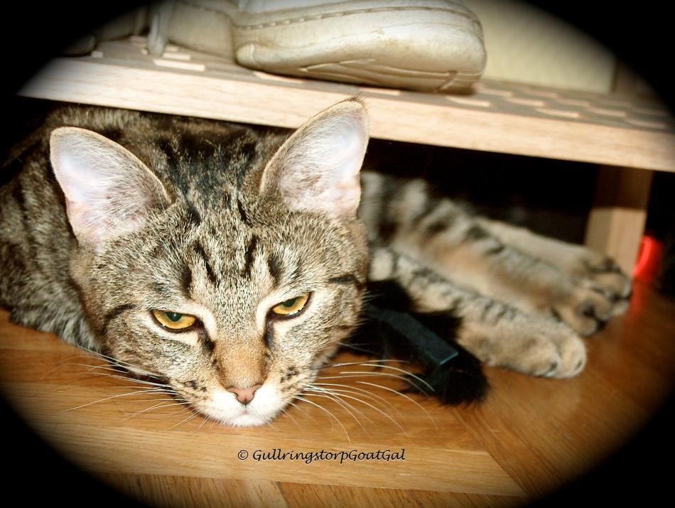 Tasha Baby, under the shoe rack