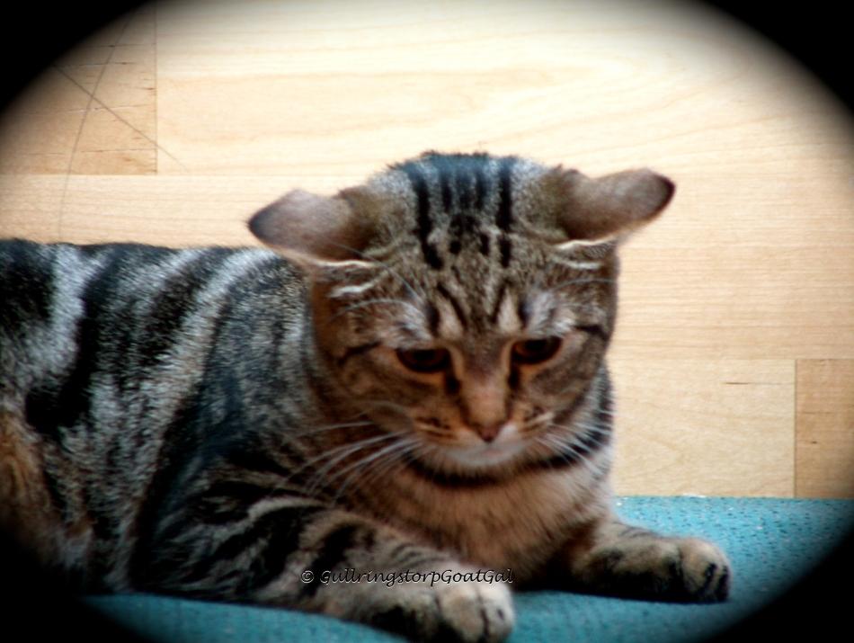 cute cat collar