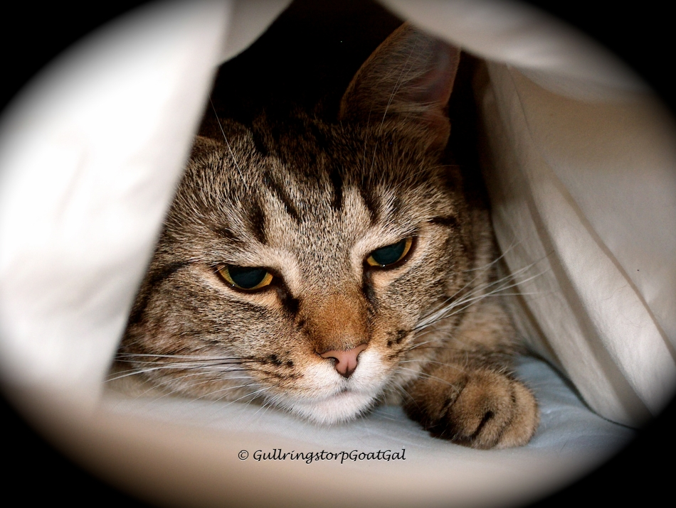 All cats love to play hide and seek. Tasha loves to hide in the duvet on the bed.