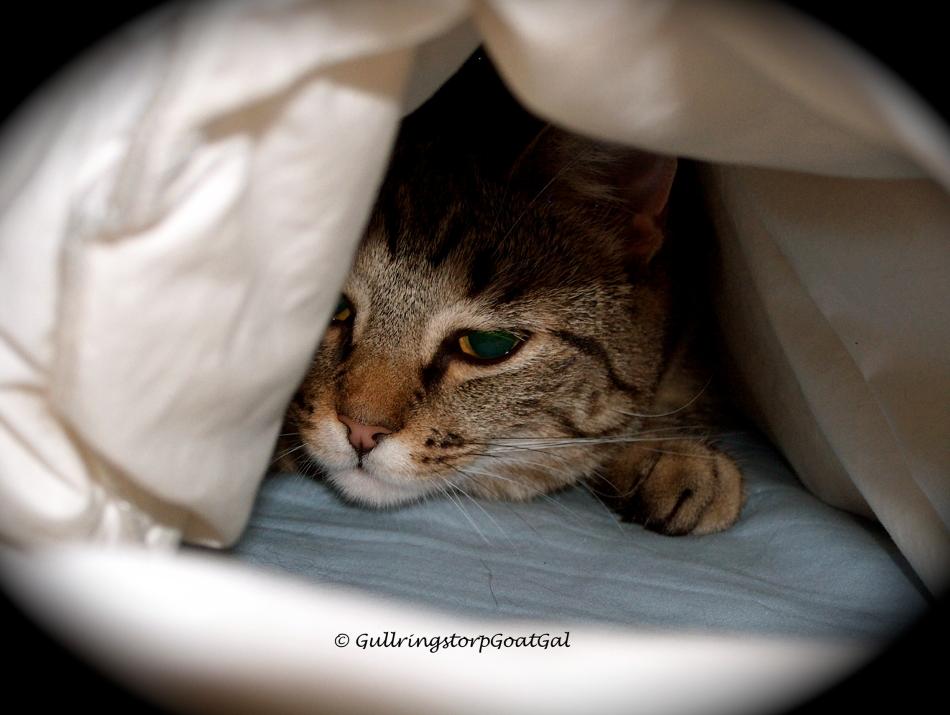 Peek - a Boo !!!