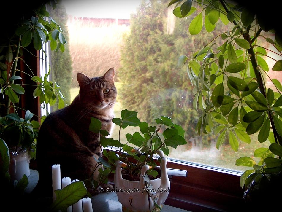 Tasha enjoying the window