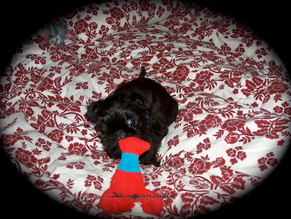 One of the safest, coziest and most fun places for Little Max to play is mommy's bed. Here Little Max with Larry Lobster his first baby toy