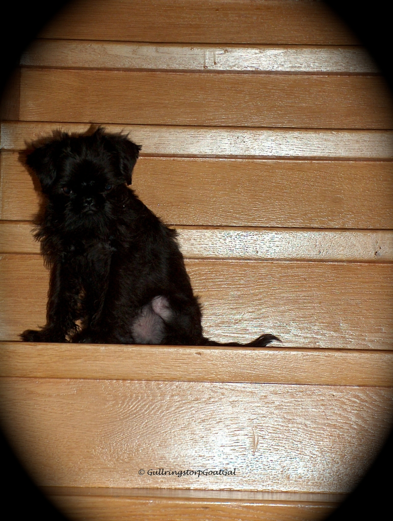 About 5 stairs up and that's as far as one little fellow can go. Now he can't go up and he can't get down. What's a tiny fellow to do? Mommy to the rescue!.