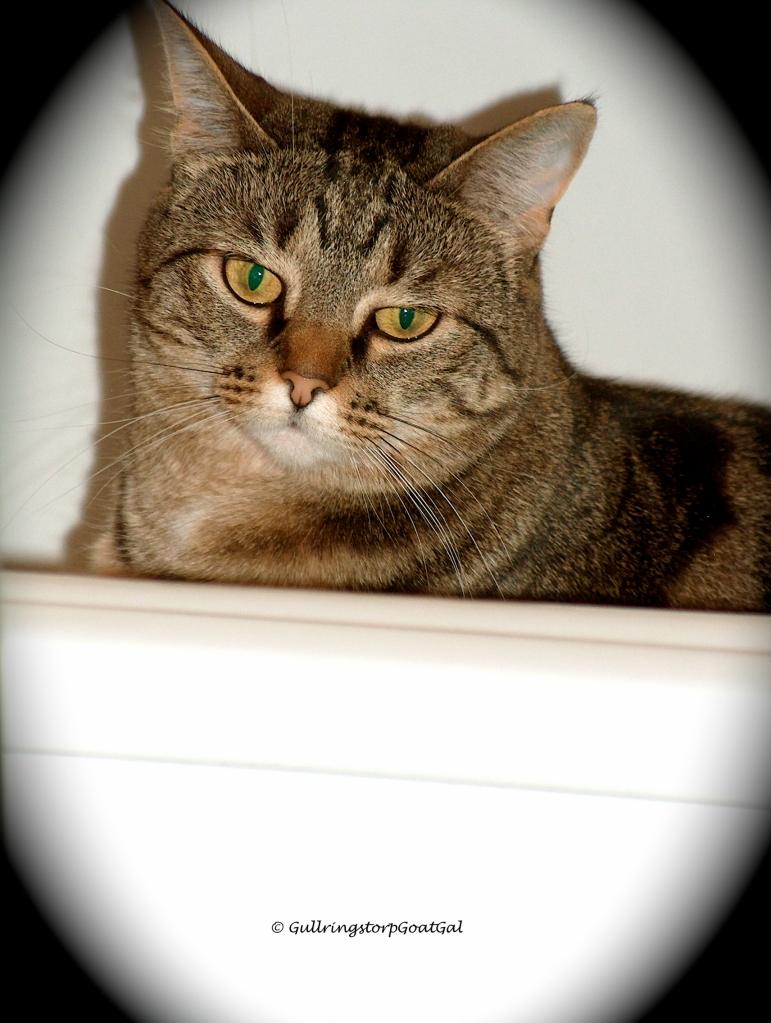 Bath tub kitty