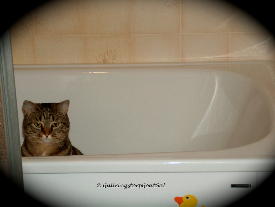Tasha is like Pip, she loves water