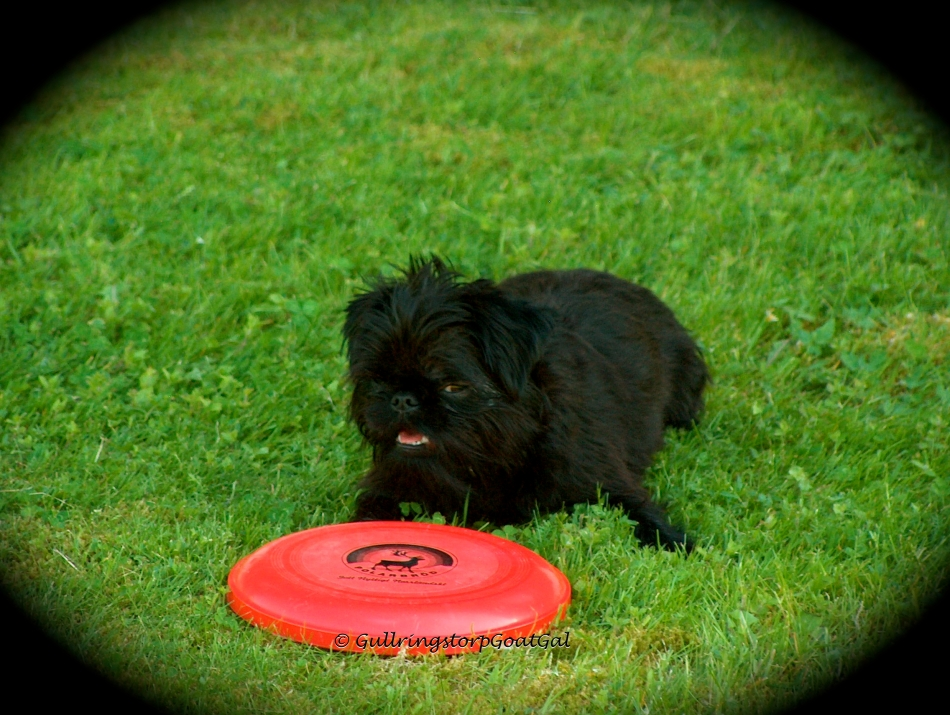 Taking a rest with his frisbee