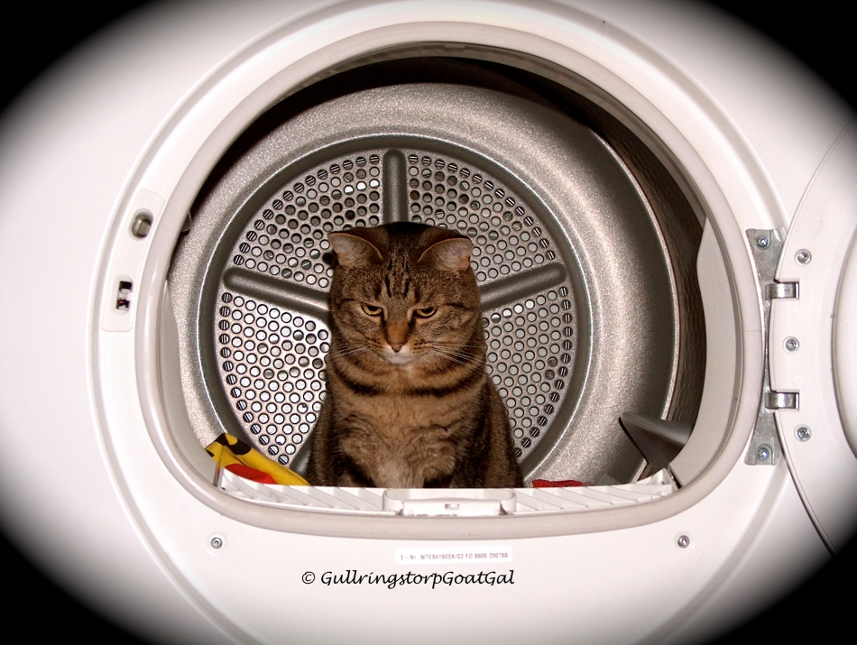 Kitty in a dryer !