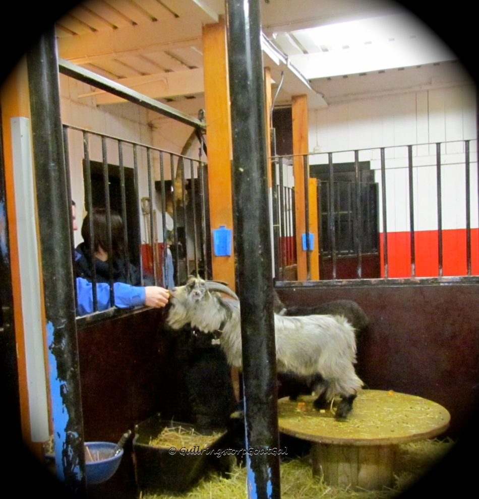 Marie soon learned that the boys are easier to feed from outside the box. They are better behaved