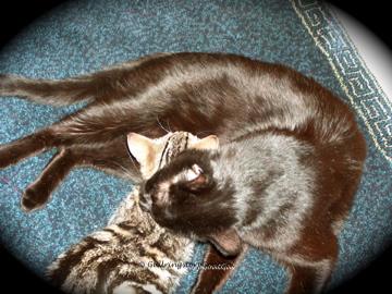 Puck and Tasha were often seen snugging