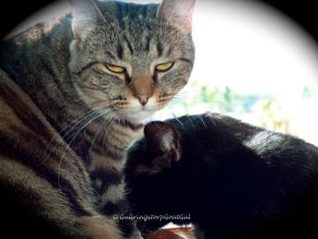 As Tasha grew, so did their friendship