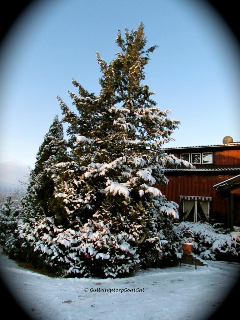 Looks like a Christmas tree, doesn't it?
