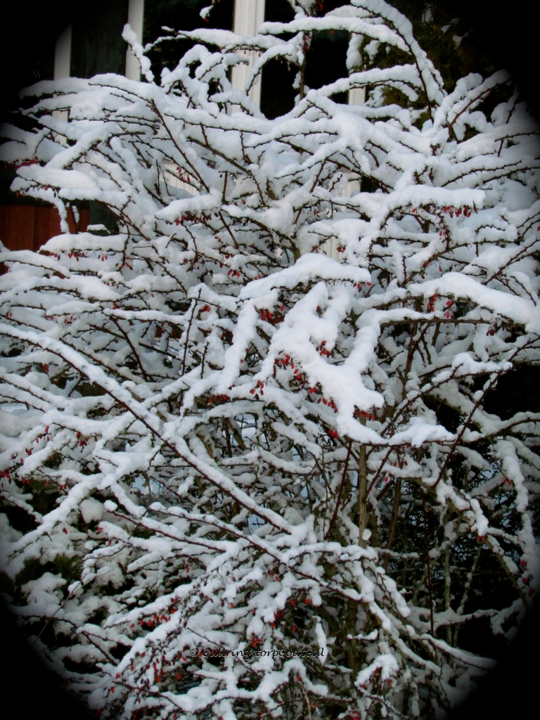 It's amazing how the snow can actually pile up on such tiny delicate branches