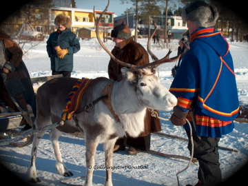 Preparing for a reindeer driven sleigh ride
