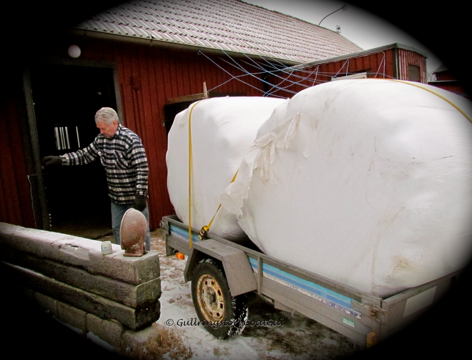 There's my husband making way for the bales to go inside