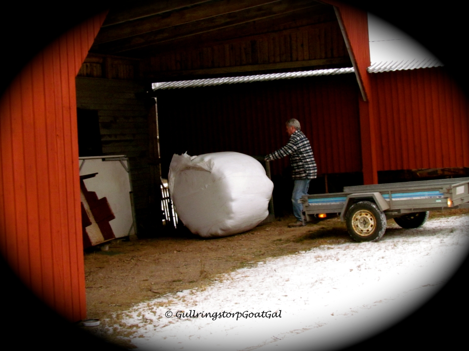 This time, with a push, the bale kind of rolled downhill into its resting place.