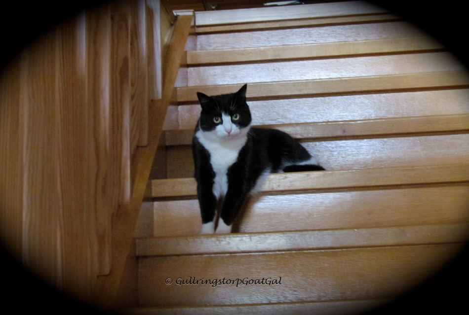 This is Pip's Leap Year choice; to sit on his stairs, his way!